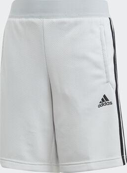 adidas Predator 3S shorts junior Gutt Grå